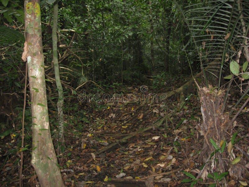 Una trayectoria a través del bosque en los jardines botánicos de Makiling, Filipinas imágenes de archivo libres de regalías