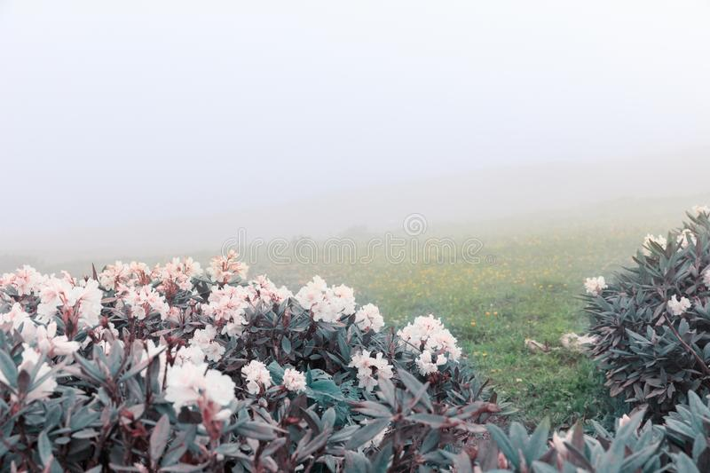 Una valle con fiori contro le nuvole nelle montagne nelle montagne Natura russa vicino a Soci, Caucaso fotografia stock libera da diritti