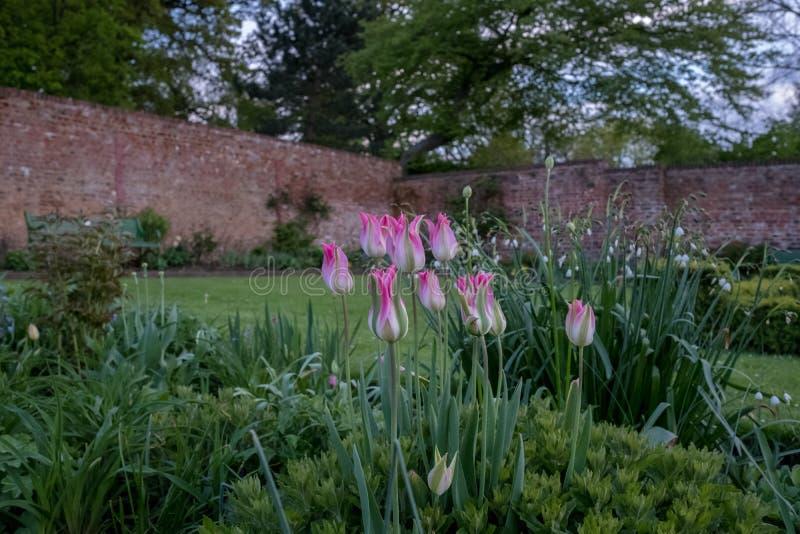 Una variedad de flores salvajes coloridas en la exhibición en Eastcote contienen los jardines, jardín emparedado histórico manten imagen de archivo libre de regalías