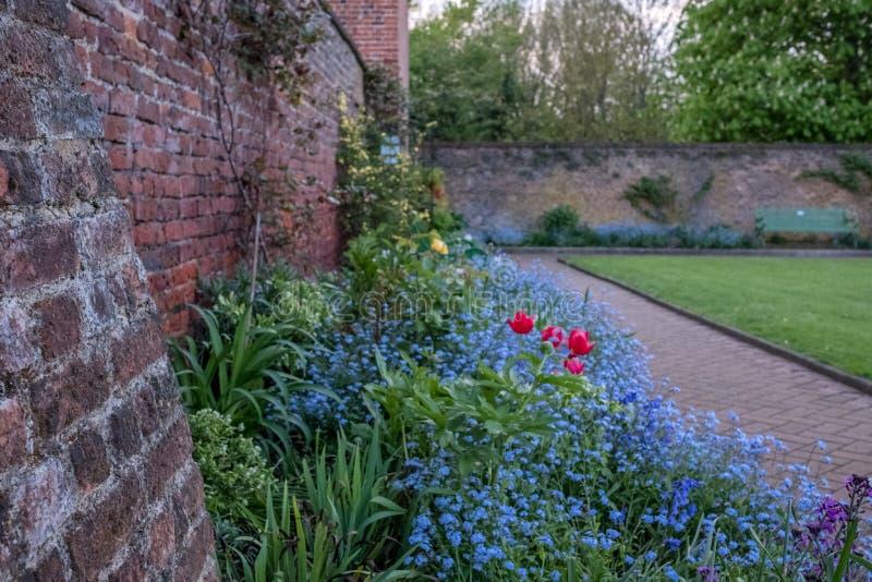 Una variedad de flores salvajes coloridas en la exhibición en Eastcote contienen los jardines, jardín emparedado histórico manten foto de archivo libre de regalías