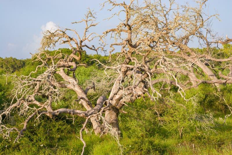 Una variedad de follaje vivo que rodea un árbol muerto fotos de archivo libres de regalías