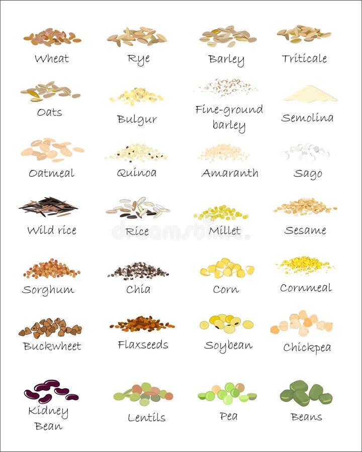 Una variedad de granos y de cereales ilustración del vector