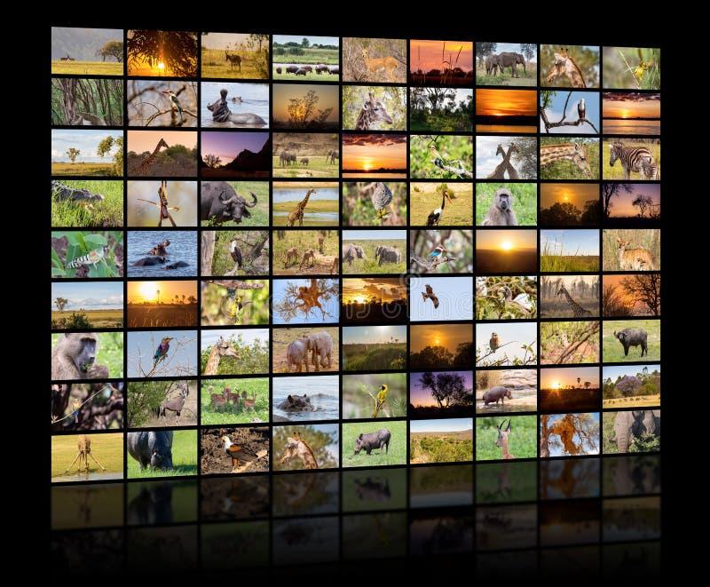 Una variedad de imágenes de Botswana como pared grande de la imagen, canal documental imagen de archivo libre de regalías