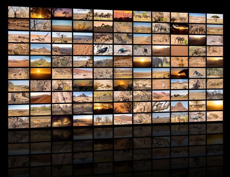 Una variedad de imágenes de Namibia como pared grande de la imagen fotografía de archivo libre de regalías