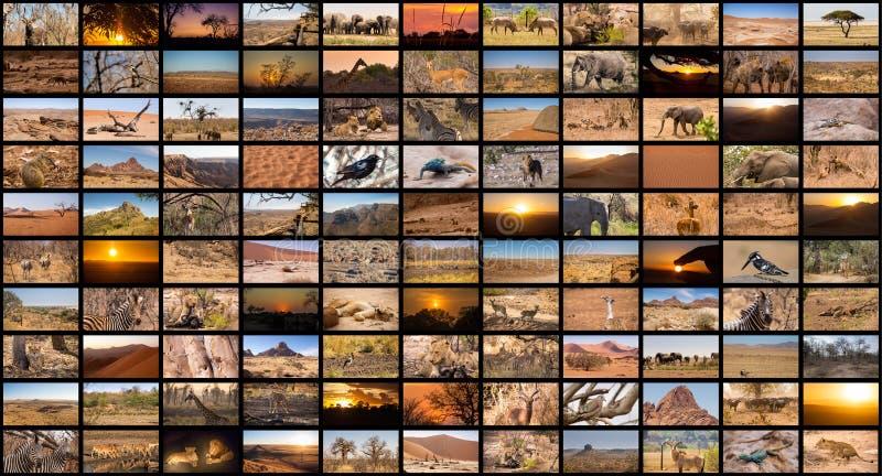 Una variedad de imágenes de Namibia como pared grande de la imagen, documentales fotos de archivo libres de regalías