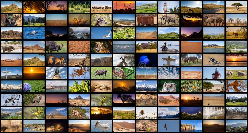 Una variedad de imágenes de los paisajes y de los animales como pared grande de la imagen, canal documental imagenes de archivo