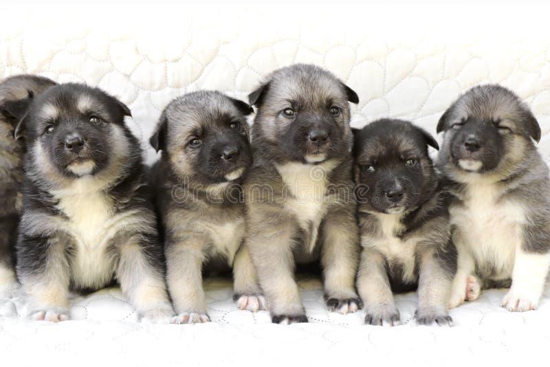Una variedad de pequeños perritos recién nacidos mensuales imagen de archivo libre de regalías