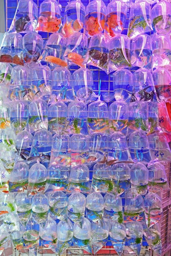 Una variedad de pescados del acuario del agua dulce vendieron en la bolsa de plástico transparente imagen de archivo