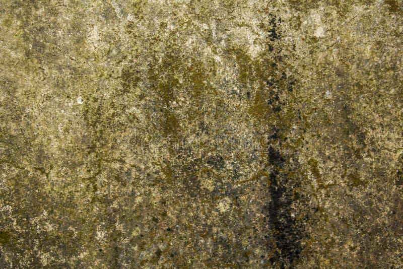Una vecchia parete bianco-grigia sporca con le macchie di sporcizia, della muffa e del muschio Struttura approssimativa Muro di c fotografie stock libere da diritti