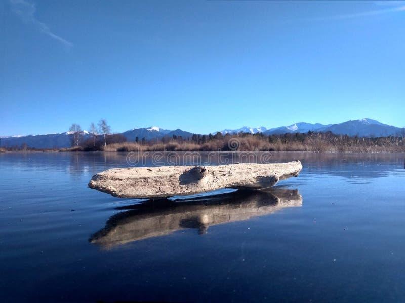 Una vecchia smagliatura su un ghiaccio della palude su un pomeriggio soleggiato di ottobre immagini stock