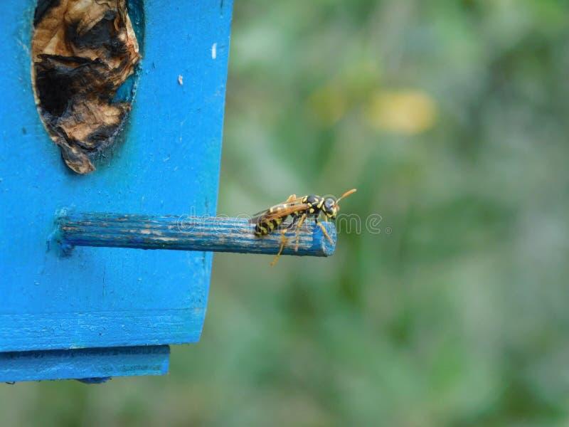 Una vespa ha trovato dove fare il suo nido fotografie stock