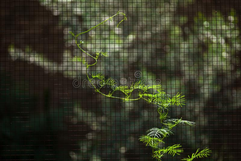 Una vid en la valla fotografía de archivo