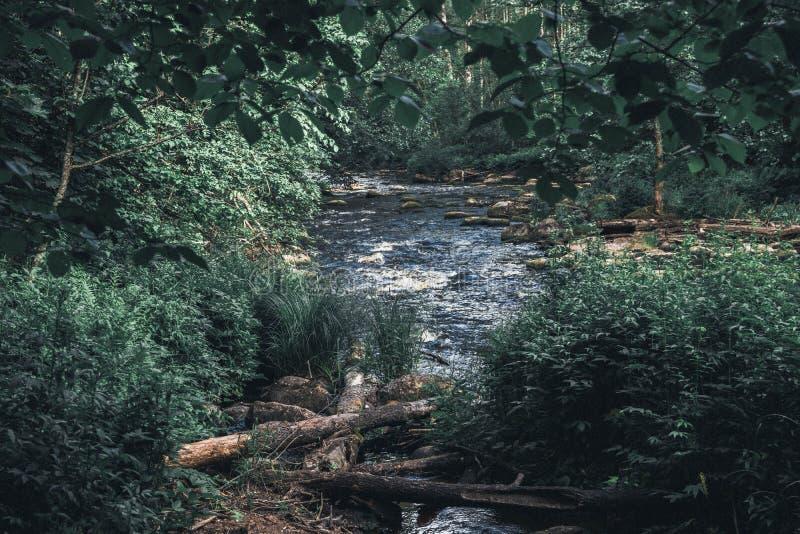 Una vida reservada por el río imagen de archivo libre de regalías