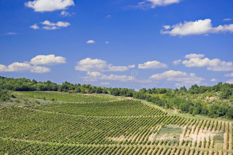 Download Una vigna in Macedonia immagine stock. Immagine di paesaggio - 215913