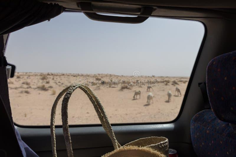 Una visión desde la ventanilla del coche en el desierto del Sáhara cerca de la ciudad de Tozeur, Túnez fotos de archivo