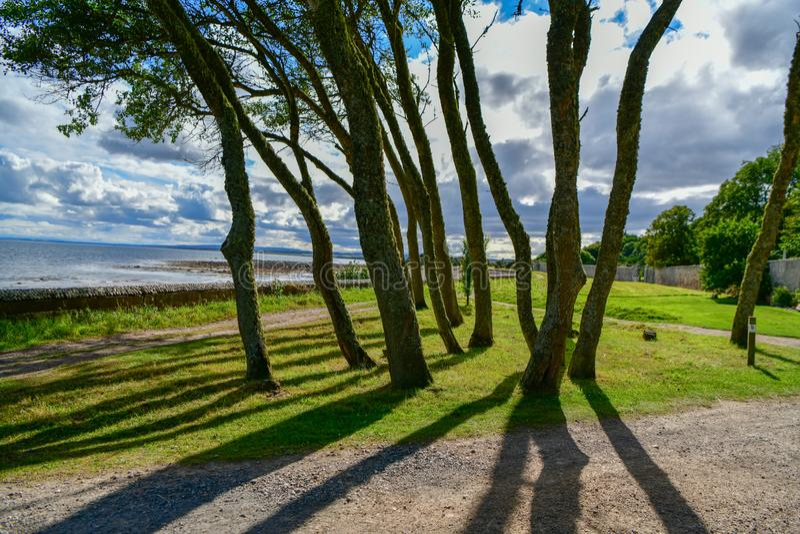 Una visión fantástica a través de los árboles al mar imagen de archivo libre de regalías
