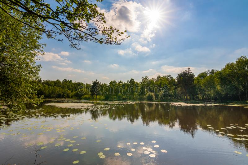 Una visión a través de un pequeño lago en lancashire rural en un soleado claro imagenes de archivo