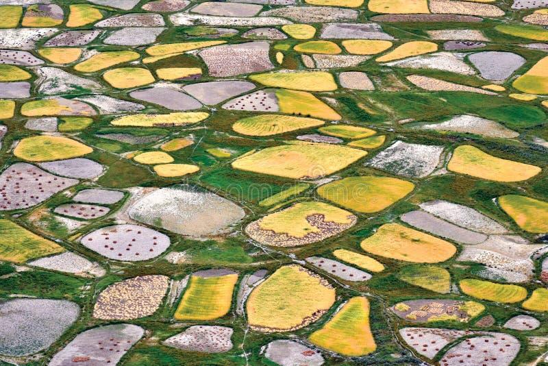 Una vista aerea dei campi durante il tempo di raccolta, valle di Zanskar, Ladakh, il Jammu e Kashmir, India immagini stock libere da diritti