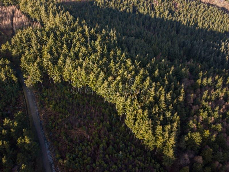 Una vista aerea della foresta di Haldon in Devon, Regno Unito fotografia stock libera da diritti