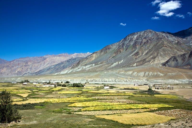 Una vista aerea di Padum, valle di Zanskar, Ladakh, il Jammu e Kashmir, India fotografia stock libera da diritti