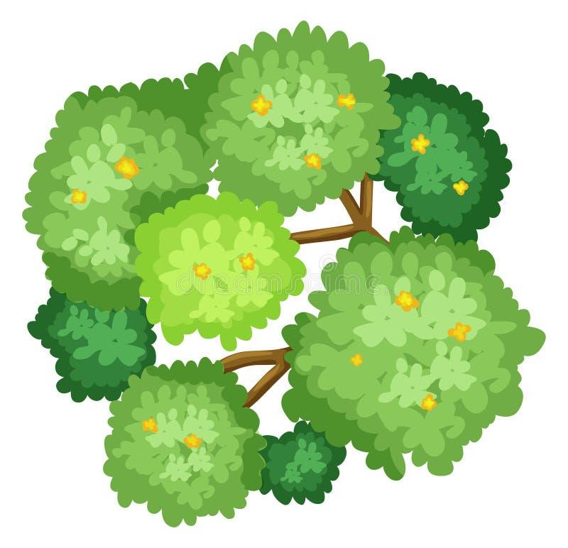Una vista aerea di un albero illustrazione di stock