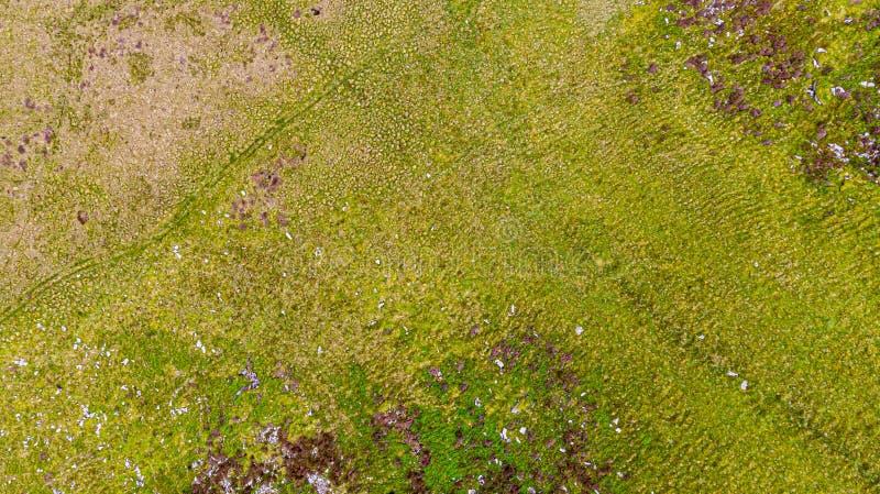 Una vista aerea di un pendio di verde della montagna e di una palude, struttura del fondo immagine stock