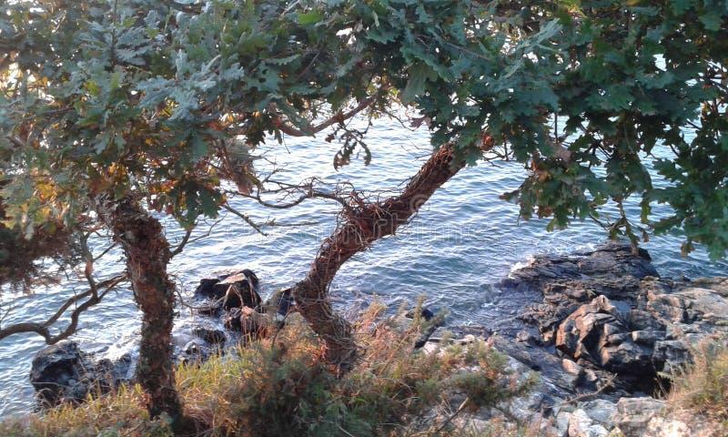 Una vista attraverso gli alberi fotografia stock