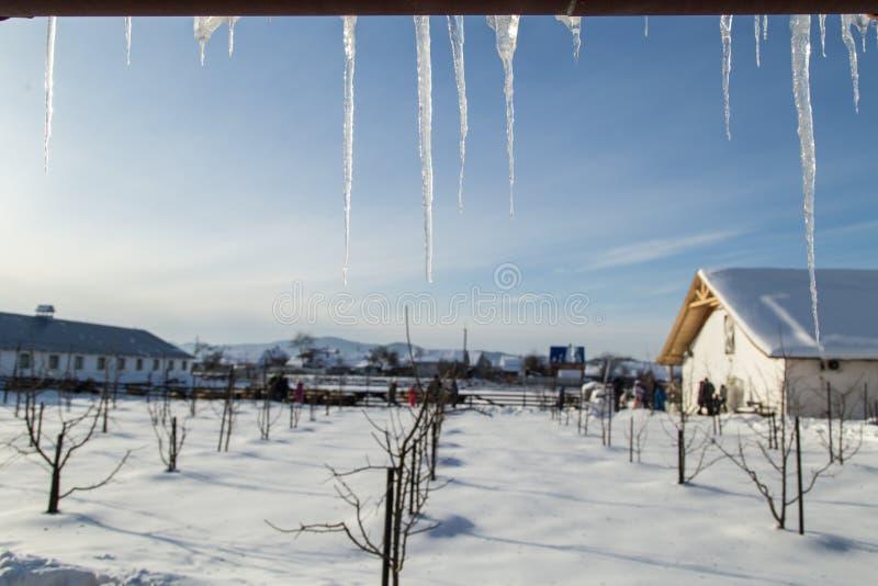 Una vista attraverso i ghiaccioli sul giardino di inverno immagini stock