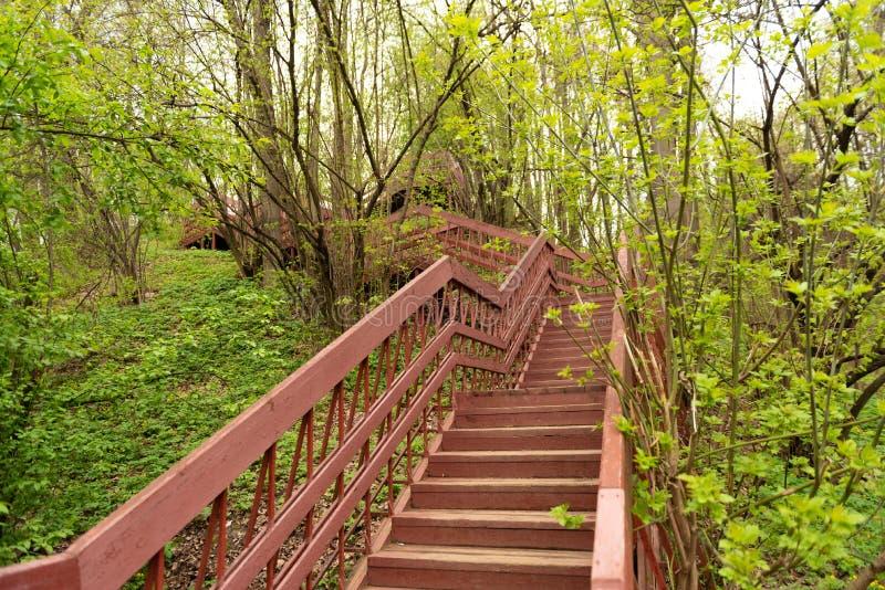 una vista, cercante per la cima di una scala di legno lunga situata in una parte della foresta di una traccia di escursione ed us fotografia stock