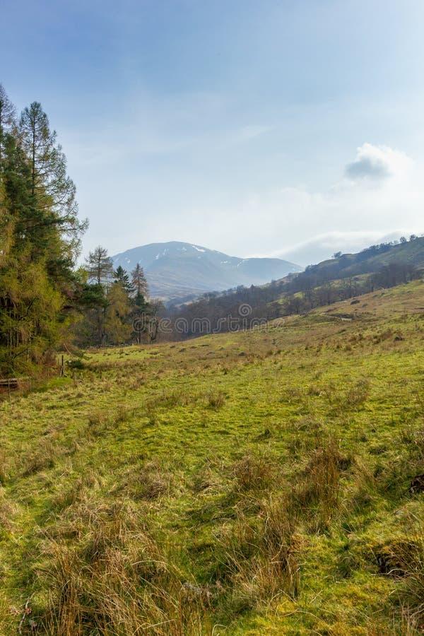Una vista de una cuesta verde herbosa con los árboles de pino y de la cumbre de la montaña en el fondo bajo un cielo azul majestu fotos de archivo