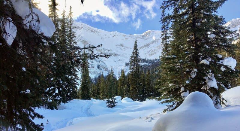 Una vista de kananaskis, Alberta, Canadá con nieve recientemente pulverizada imágenes de archivo libres de regalías