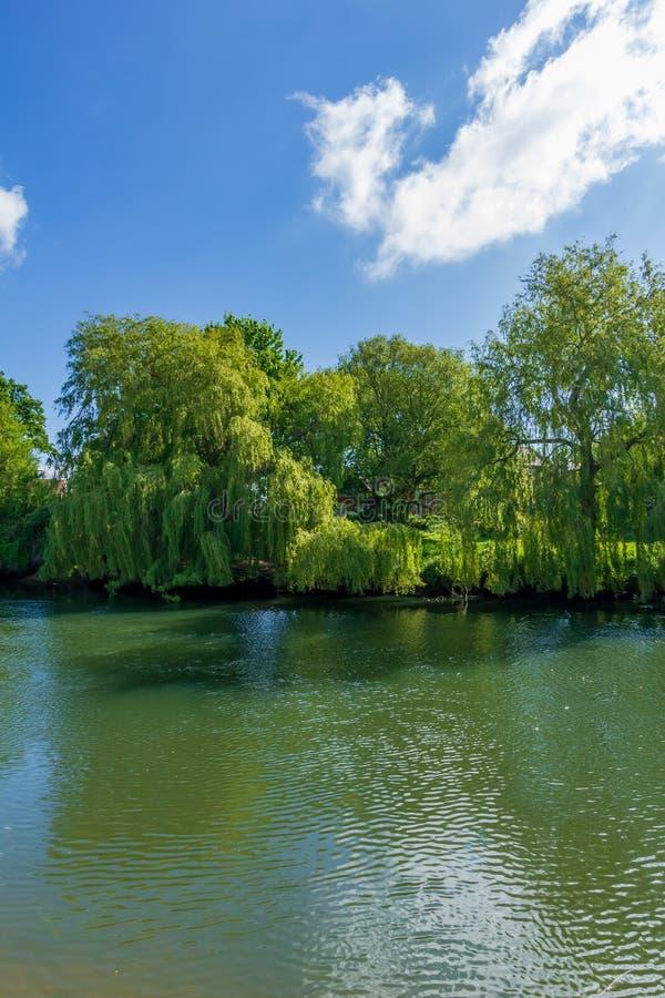 Una vista degli alberi magestic lungo la banca di un fiume calmo sotto un cielo blu maestoso e le nuvole bianche fotografia stock libera da diritti
