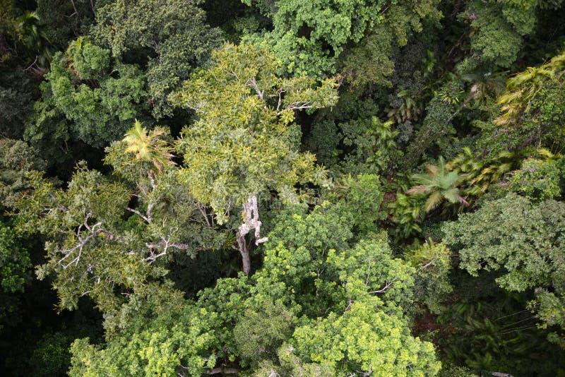Una vista del birdseye di una foresta pluviale australiana fotografia stock libera da diritti