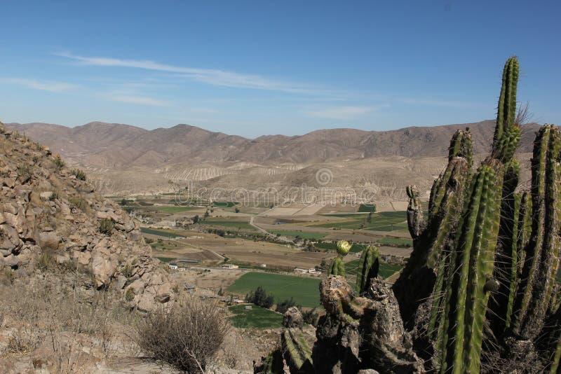 Una vista del canyon di Colca immagine stock