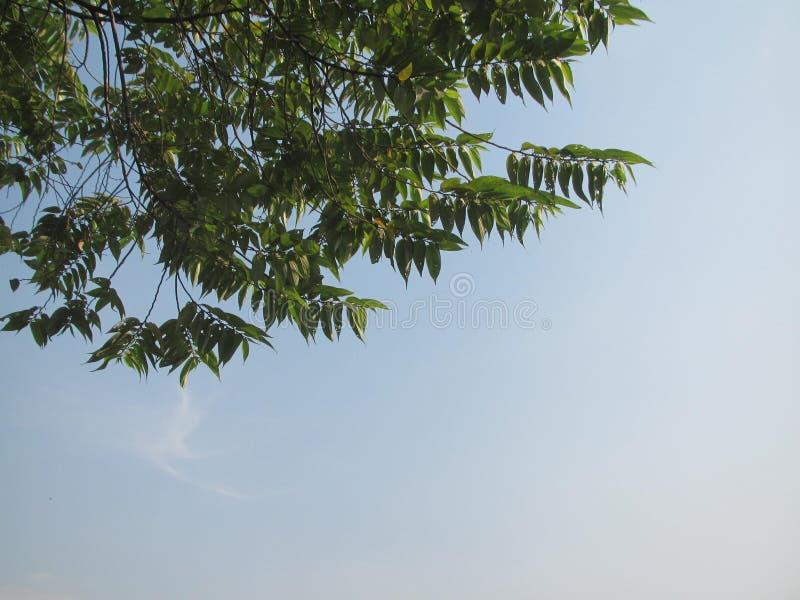 Una vista del cielo vacío con las hojas hermosas fotografía de archivo libre de regalías