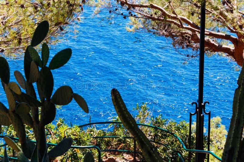 Una vista del mare attraverso gli alberi fotografia stock
