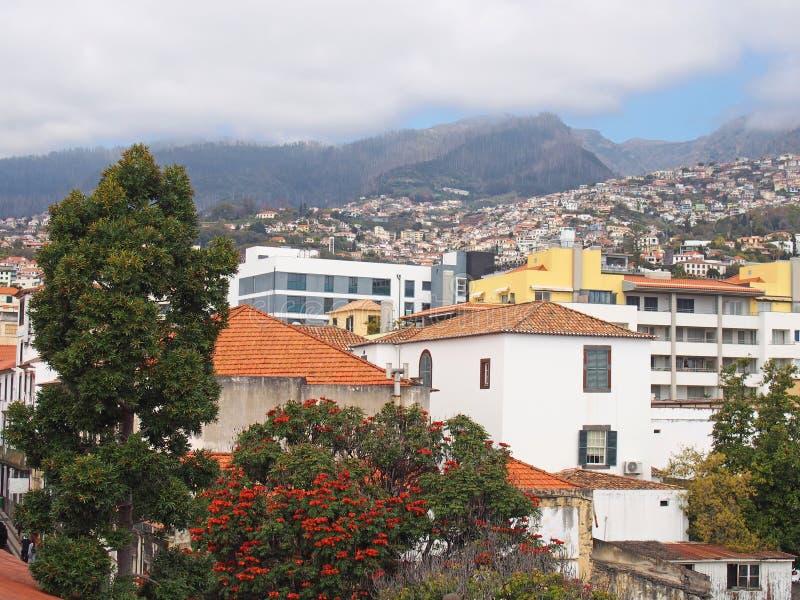 Una vista della città di Funchal in Madera con le costruzioni e gli alberi della molla contro un fondo delle montagne e del cielo immagini stock libere da diritti