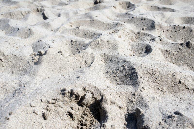 Una vista di una sabbia alla spiaggia per la carta da parati, il fondo o i contesti fotografia stock libera da diritti