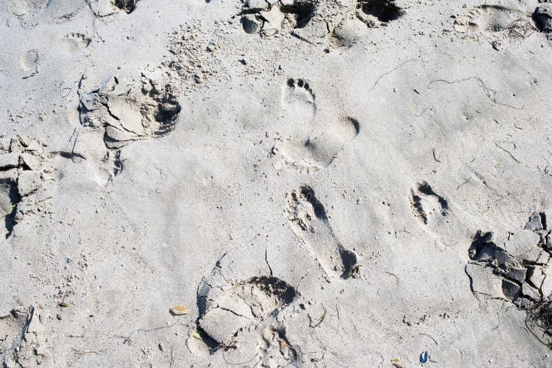 Una vista di una sabbia alla spiaggia per la carta da parati, il fondo o i contesti immagine stock libera da diritti