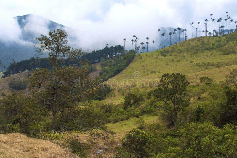 Una vista di Valle de Cocora fotografia stock libera da diritti
