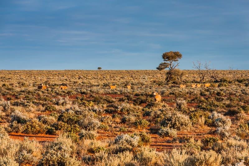 Una vista escénica del interior australiano, sur de Australia fotografía de archivo libre de regalías