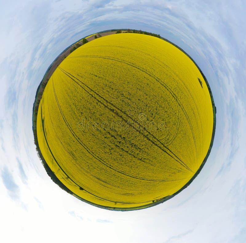 Una vista panoramica aerea di 360 gradi sul campo giallo del seme di ravizzone di fioritura con gli alberi, il cielo, il punto de fotografia stock libera da diritti