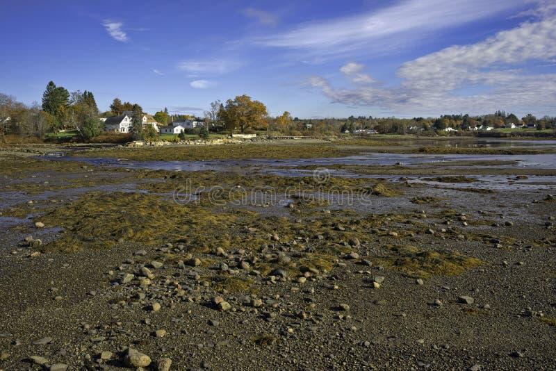 La bassa marea di Searsport Maine oscilla l'alga fotografia stock libera da diritti