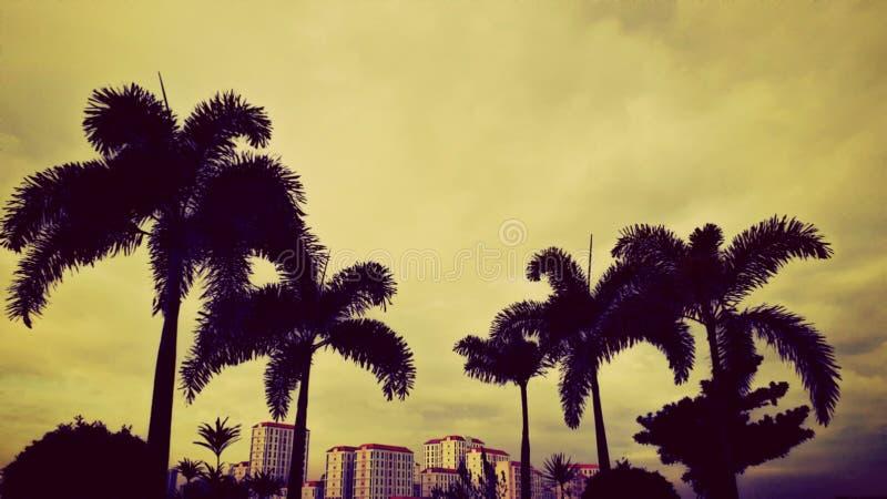 Una vista pomeridiana di un angolo perfetto di edifici sotto gli alberi Condominium California Garden, Mandaluyong, Filippine fotografia stock libera da diritti