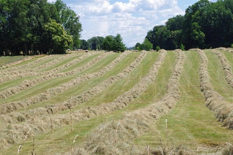 Una vista recientemente de un campo de hierba del corte que se secará y embalado foto de archivo libre de regalías