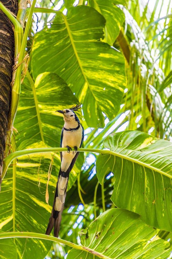 Una vista tipica nel Nicaragua fotografia stock libera da diritti