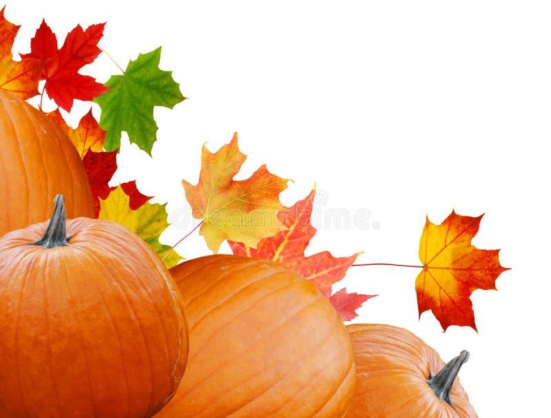 Zucca con le foglie di colore fotografia stock