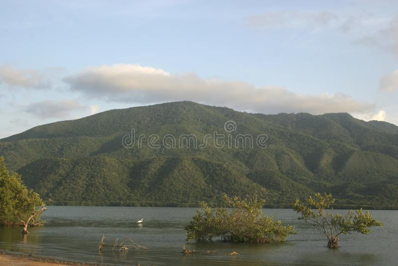 Unare盐水湖沿海沼泽地在委内瑞拉 免版税图库摄影