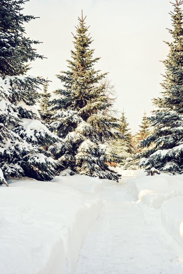 Unbedeutende Landschaft des vertikalen Winters des Koniferenwaldes an einem sonnigen Tag lizenzfreie stockfotos