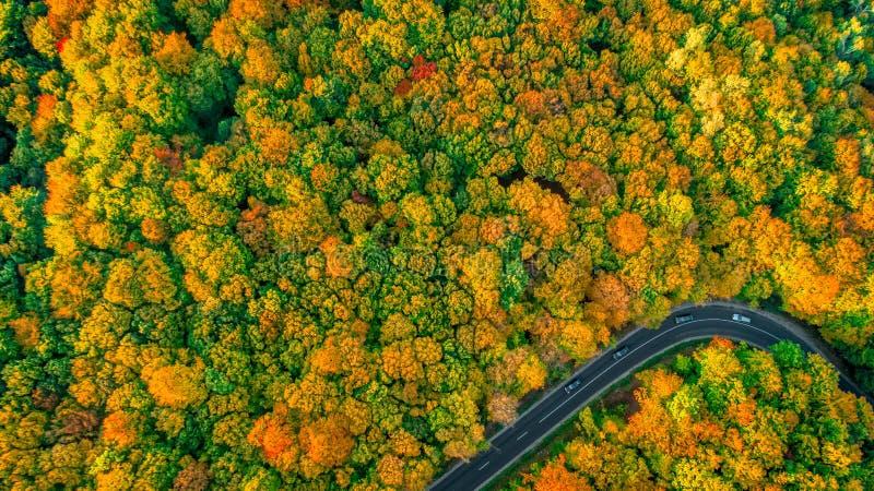Unbedeutende Vogelperspektive der Straße im Fall färbte dichten Wald stockfotografie
